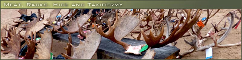 Gangler's meat, racks, hide and taxidermy